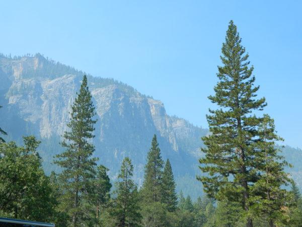 Zwei riesige Mammutbäume stehen im Vordergrund, während dahinter Felsen und Wald zu sehen sind