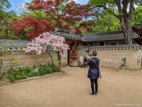 Fotografin vor blühendem Baum im Secret Garden des Changdeokgun