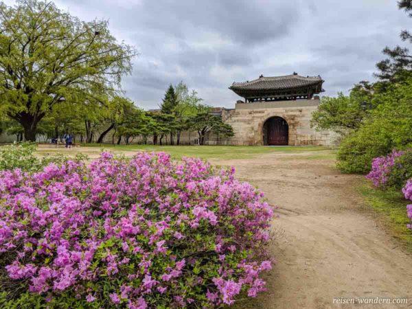 Unbenutztes Tor im Gyeongbok Palast
