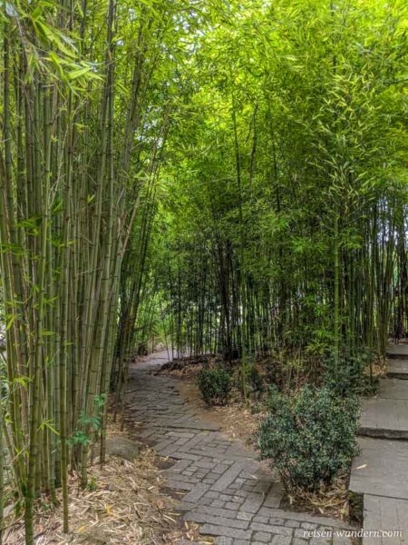 Bambushain im Jardim da Fundação Calouste Gulbenkian