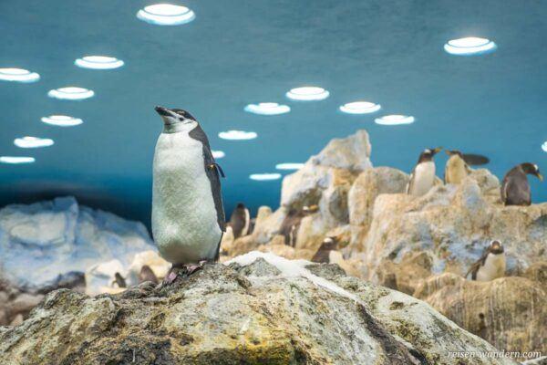 Pinguin im Loro Park auf Teneriffa