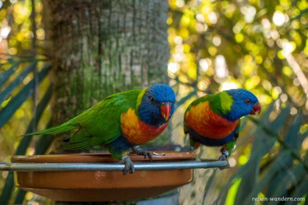 Papageien im Loro Park