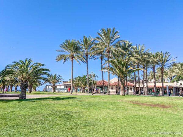 Ferienanlage mit Palmen in Maspalomas