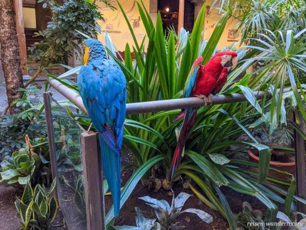 2 Papageien im Kolumbushaus in der Altstadt von Las Palmas