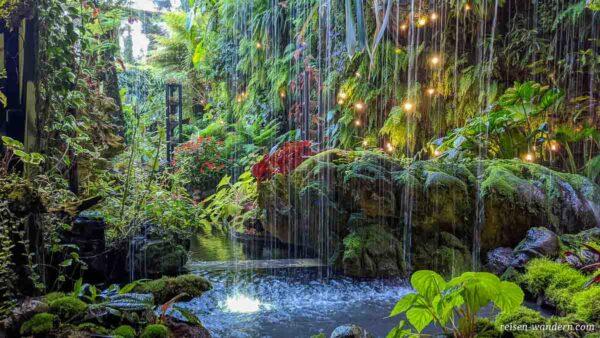 Wasserfall und Dschungelpflanzen im Cloud Forest