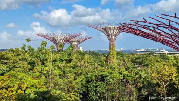 Supertrees im Gardens by the Bay in Singapure