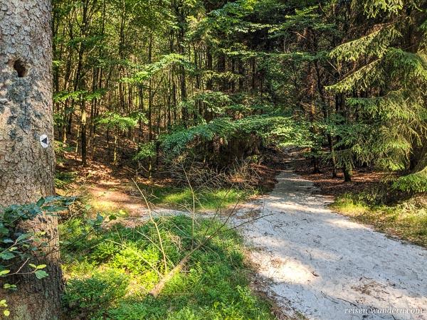 Waldpfad mit Kennzeichnung an Bäumen zu Kletterfelsen