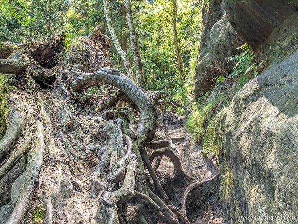 Aufstieg an einer Baumwurzel