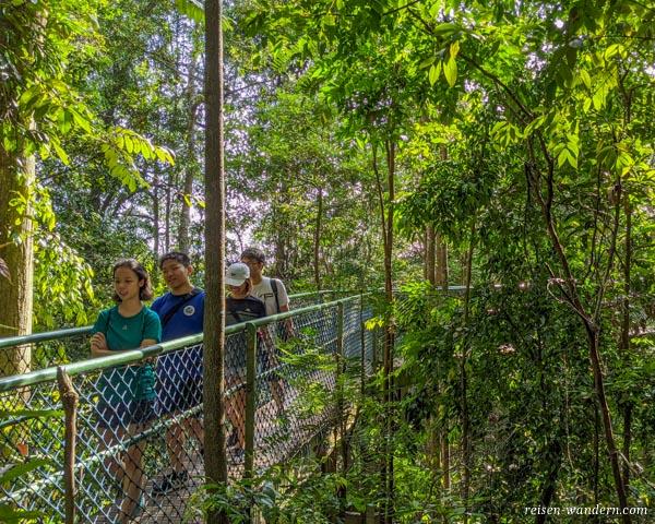 TreeTop Walk im MacRitchie Reservoir