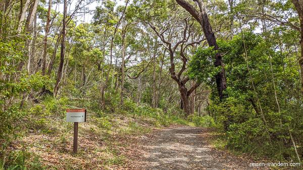 Waldweg durch den Noosa-Nationalpark