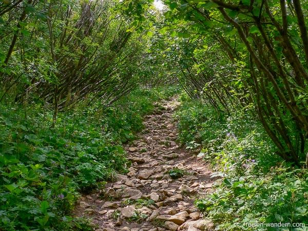 Weg durch Waldstück zum Dos d`Abramo