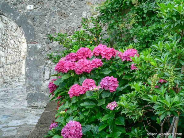 Blumen am Castello Drena am Gardasee
