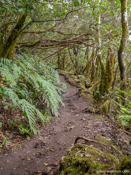Lehmhaltiger Wanderweg im Anaga Gebirge